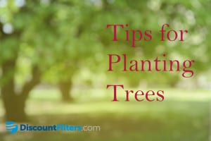 Tips for planting trees_ DF