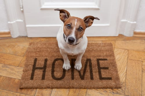 8 Best Cleaning Products for Homes with Pets