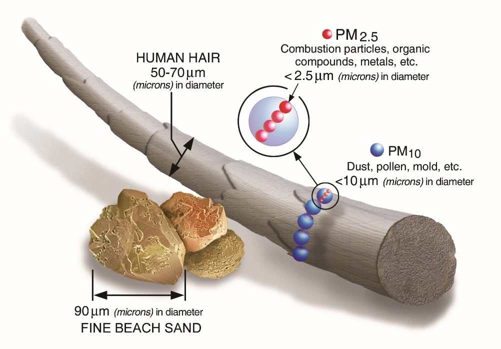 PM 2.5 and PM 10 shown to scale with human hair.